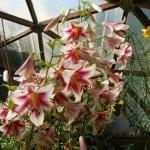julyflowers11-065-web-150x150