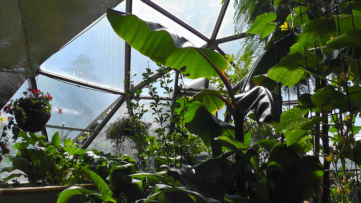 geodesic-dome-greenhouses-26-growingspaces