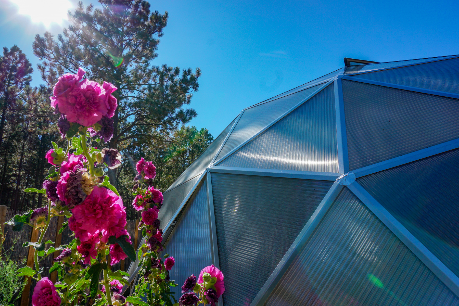 Hollyhock Dome Greenhouse