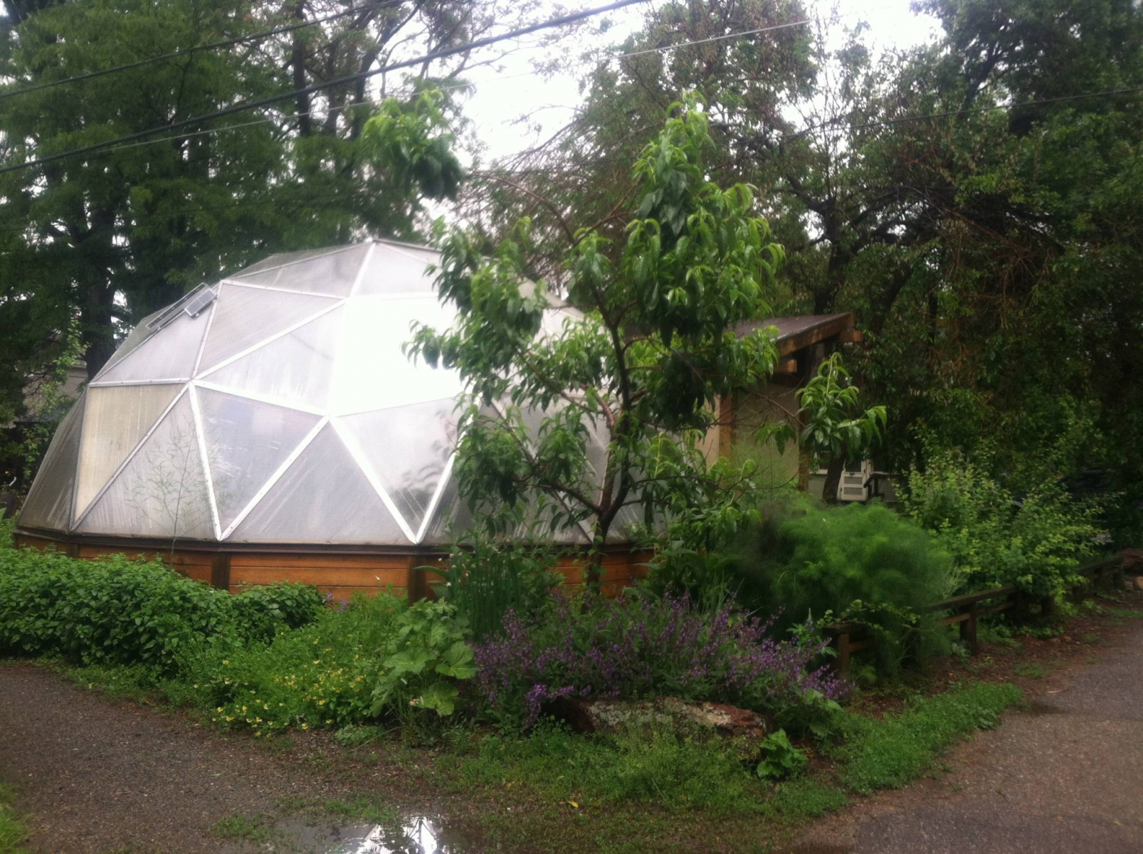 geodesic dome greenhouse with trees