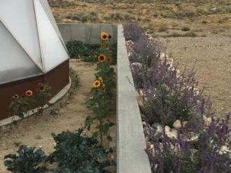 Desert Greenhouse