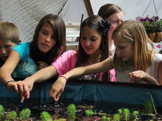 school greenhouse 33
