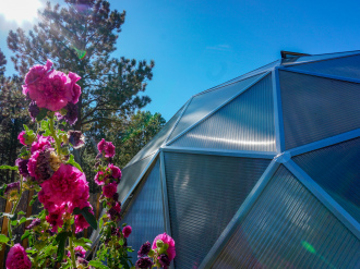 Hollyhock-Greenhouse