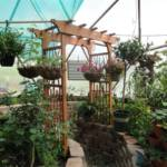 001-year-round-greenhouses-33-kleobold