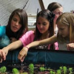 005-school-greenhouse-33-growingspaces