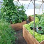 015-growing-spaces-greenhouses-33-benjamin
