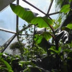 020-geodesic-dome-greenhouses-26-growingspaces