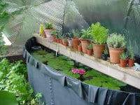 Greenhouse thermal mass pond