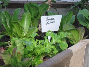 gardeningpic2