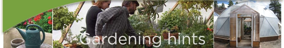 greenhouse-gardening-hints-gardeninghintshead-photo