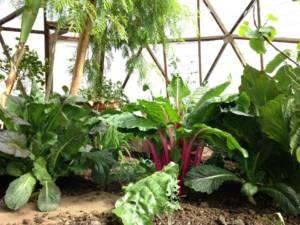 organic pest control: thrips