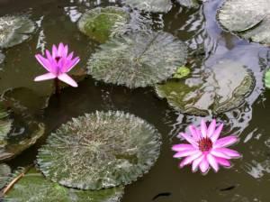 flower-441506_640