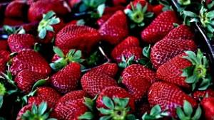 strawberries can be used as roly poly traps
