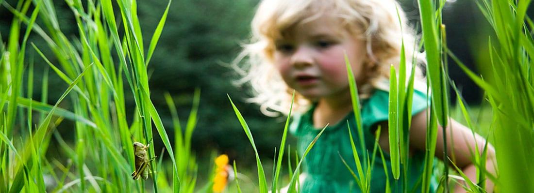 little girl observing a grasshopper