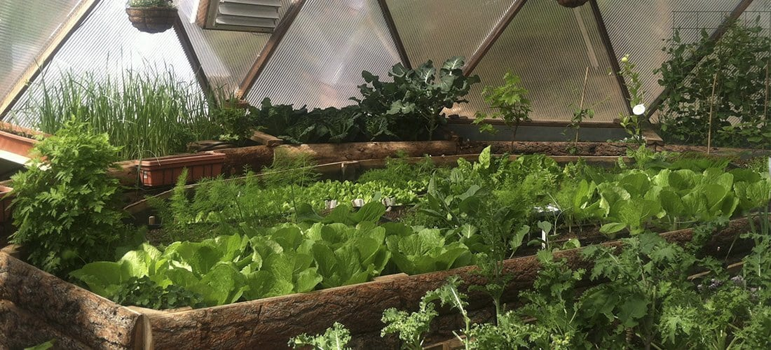 plant bed growing vegetables inside a dome