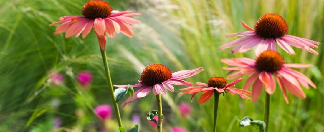 closeup shot of flowers