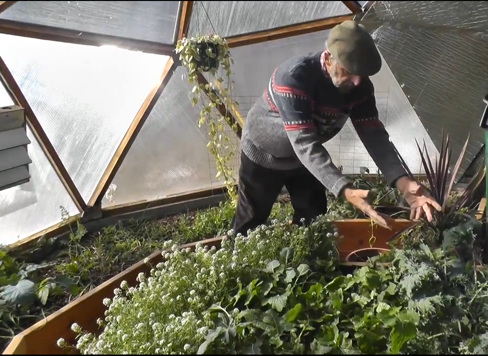 winter greenhouse gardening no heat