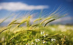 spring wind