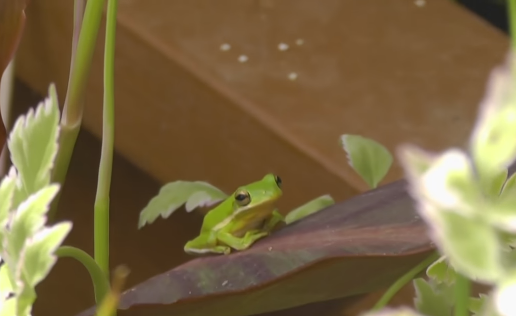 frogs in your greenhouse