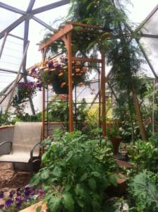 thankful for a forest garden inside Growing Dome