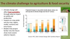 food security and agriculture