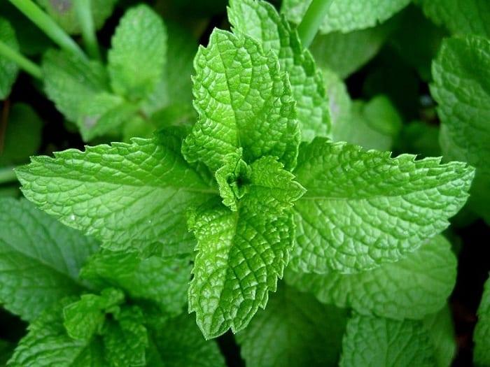Herbs for flu.