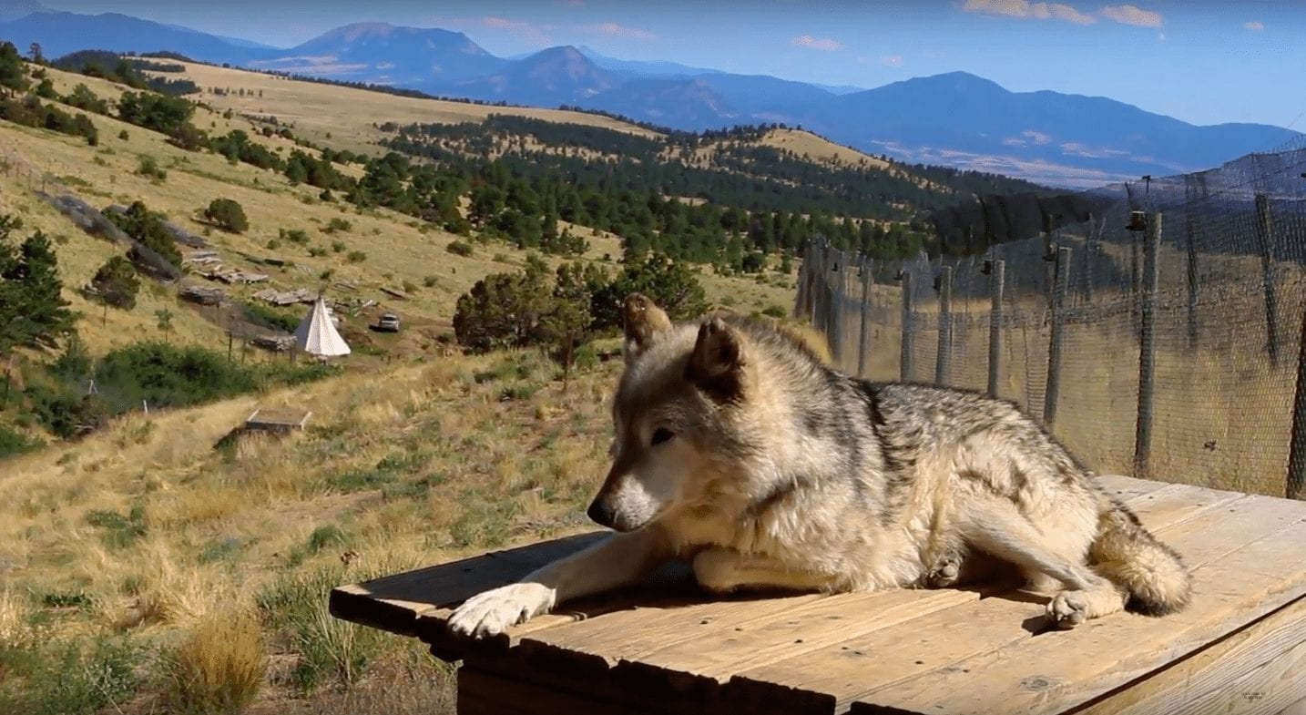 off grid wolf sanctuary