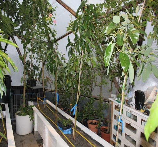 Aquaponics Bed in Growing Dome Greenhouse in Sweden