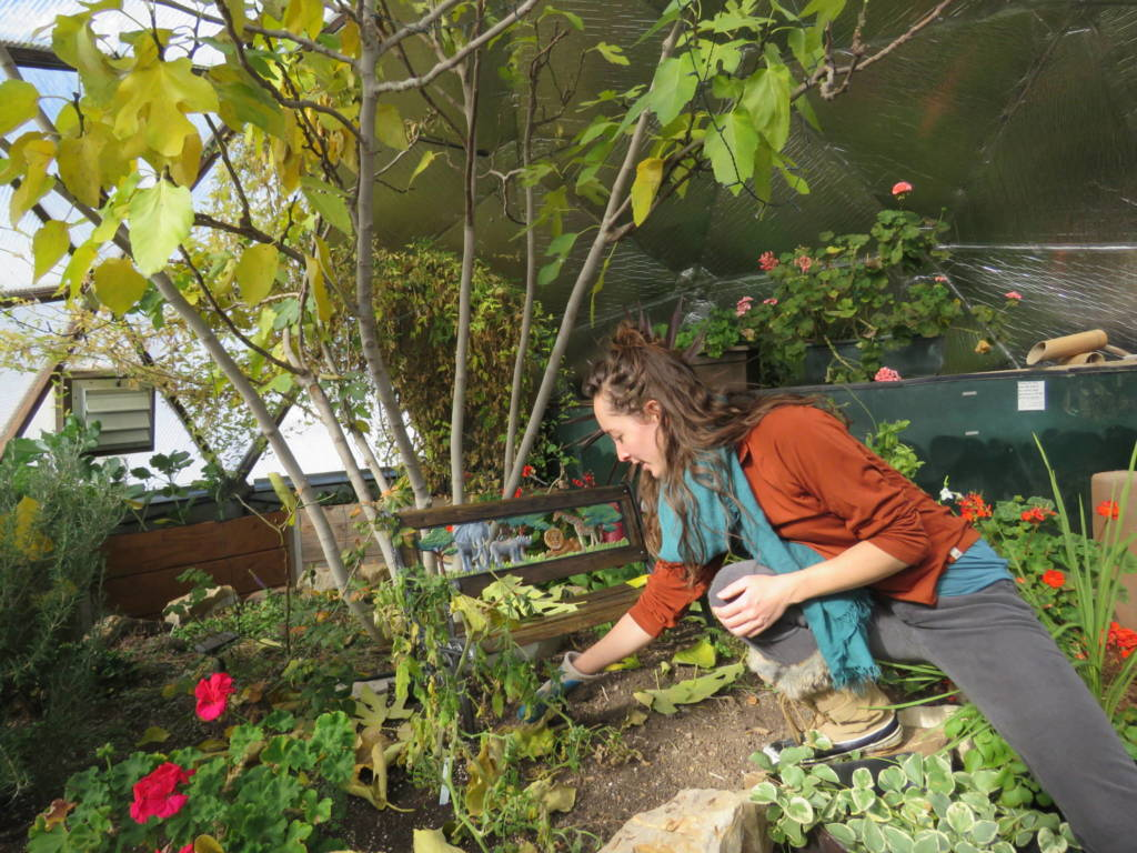 seed saving in a geodesic dome greenhouse