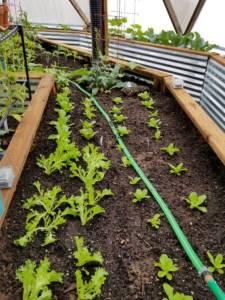 Organic Pest Management During Seeding