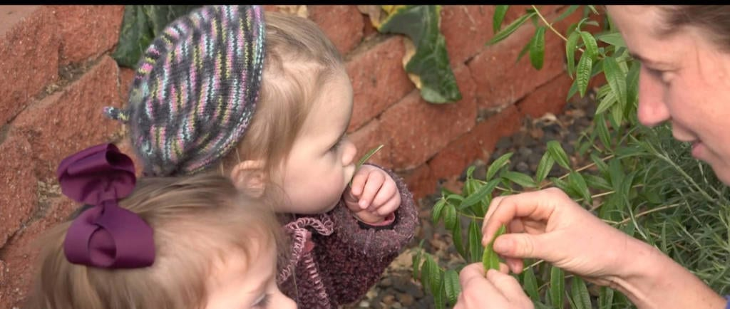 growing and tasting herbs off the vine in a greenhouse