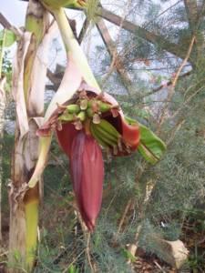 Organic Pest Management During Fruiting
