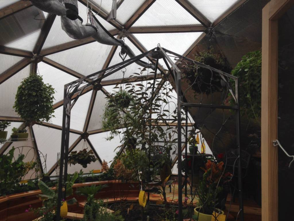 iron trellis in Growing Dome Greenhouse