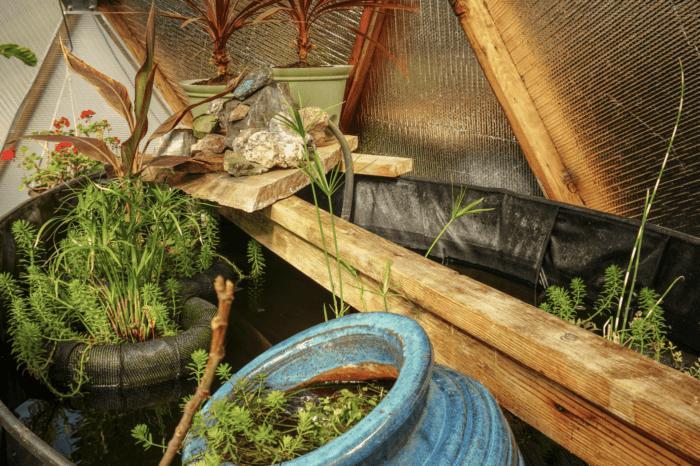 Claudia's Pond Plants