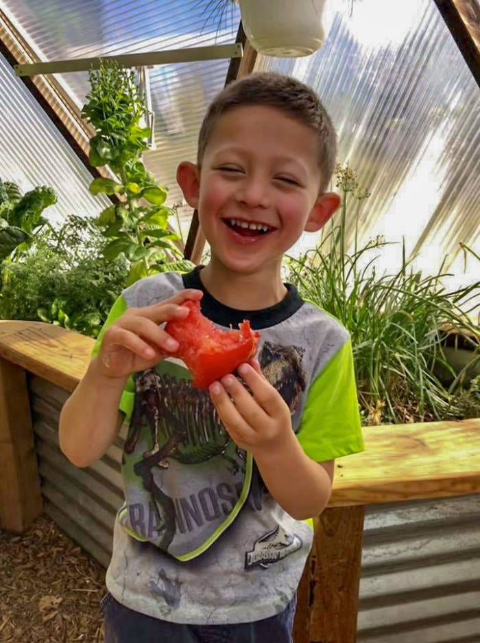 Kid eating a tomato off the vine in a Growing Dome greenhouse