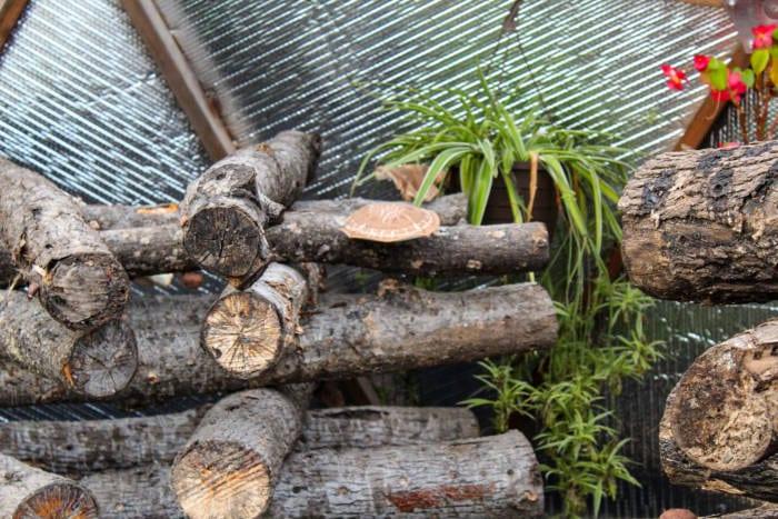 Shiitake Mushroom Stack