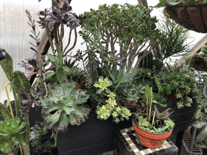 succulents in greenhouse 3