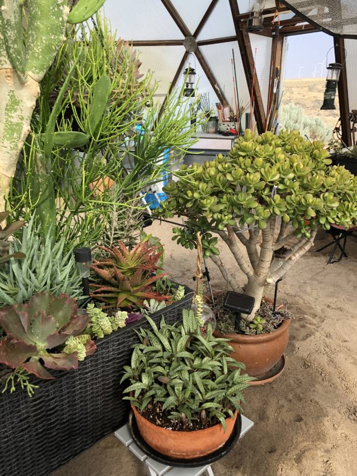 succulents in greenhouse