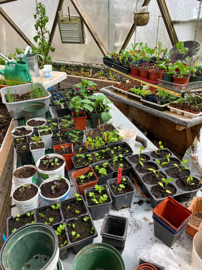 nutrient - dense food propagating in the greenhouse
