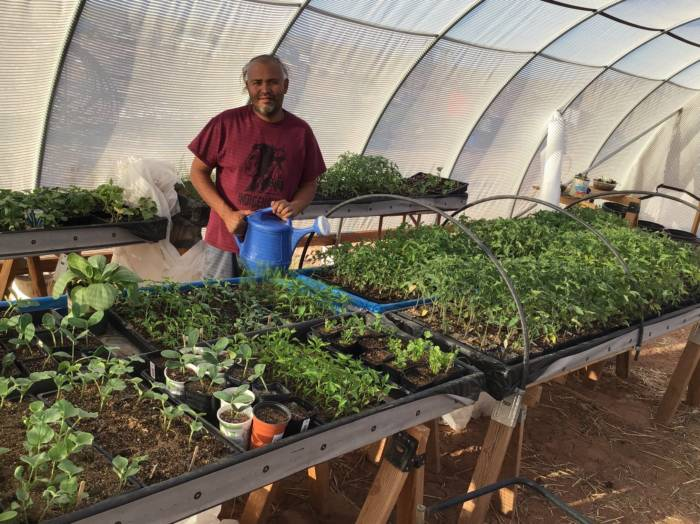 Navajo Master Gardener Tyrone Thompson growing in a greenhouse