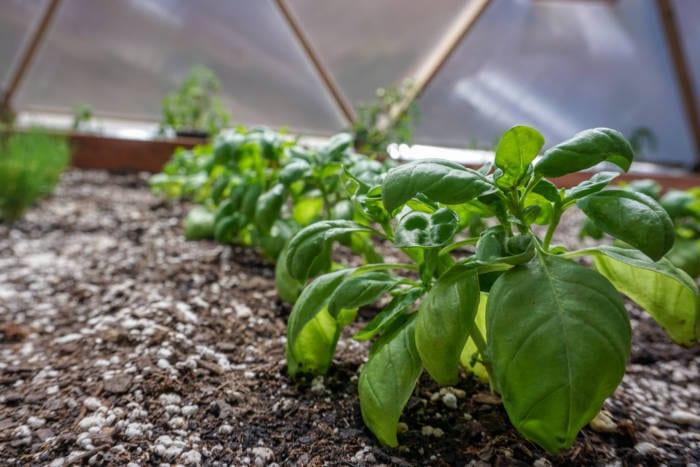 not hydrophobic soil