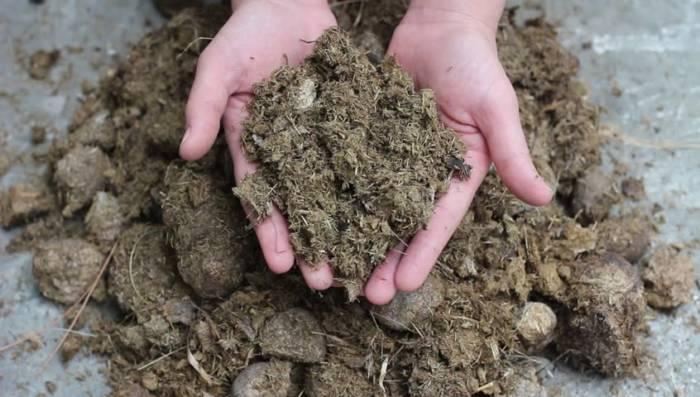 manure - hydrophobic soil