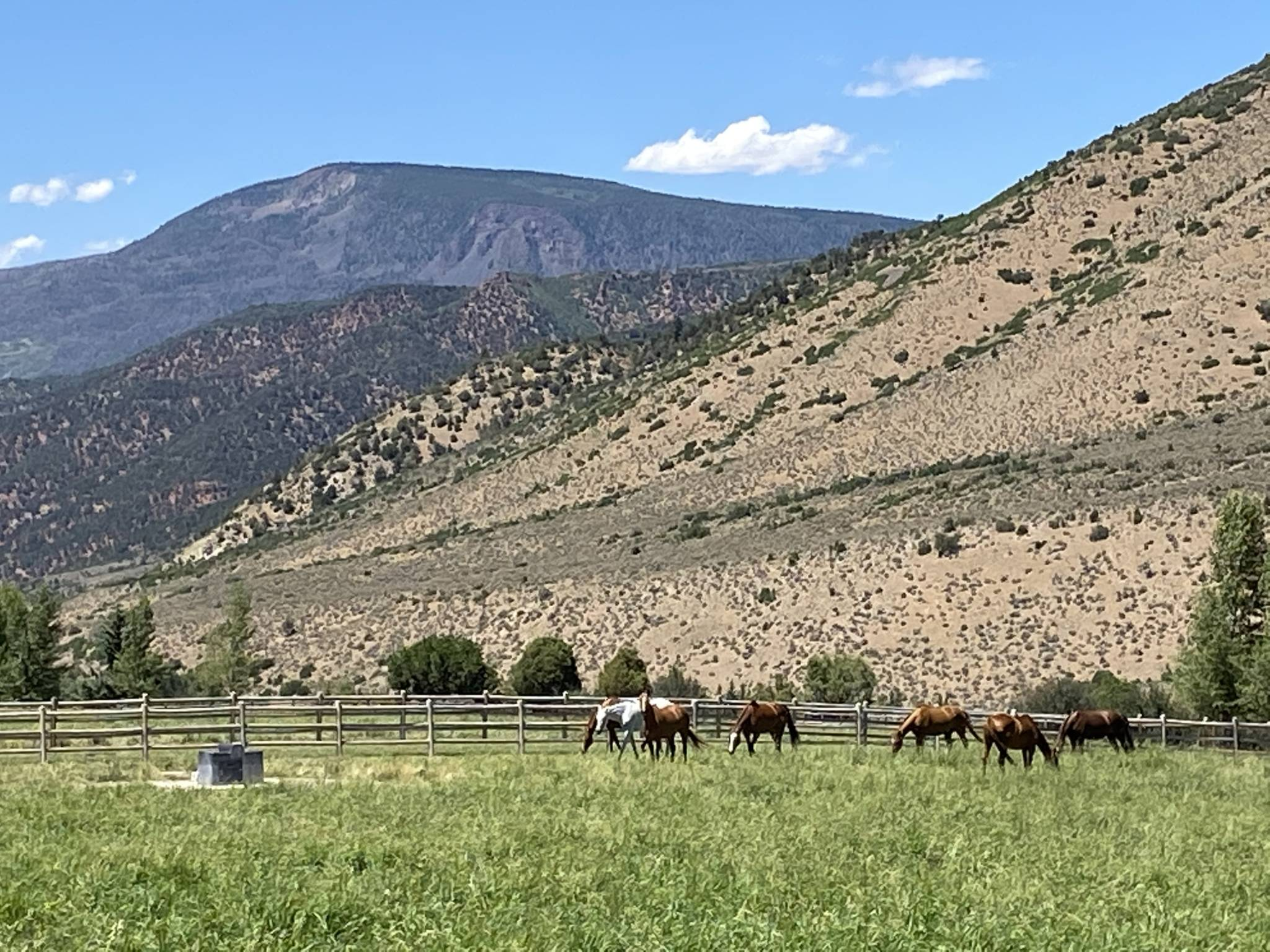 Horses at the Windstar Ranch