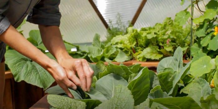 aphid control via ventilation